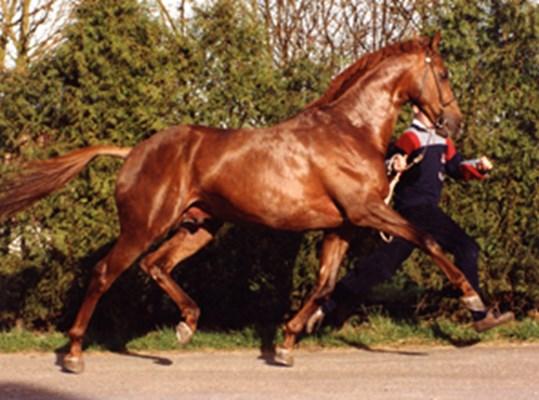 Apollonios (2000)