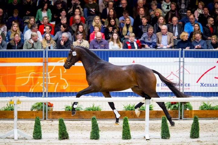Blue Horse Livius